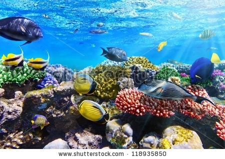Stock Photo Coral And Fish In The Red Sea Egypt 118935850